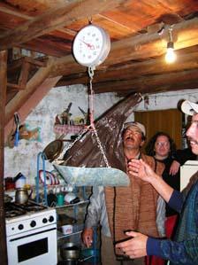Pesando Truchas