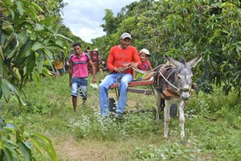 In the mango orchards in the Assentamento (Settlement) Safra in Pernambuco. (Photo by Mel Gurr)