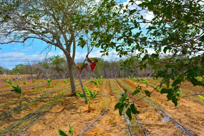 João Vitor climbs tree in vegetable gardens in the Assentamento (Settlement) Safra, Pernambuco (Photo by Mel Gurr)