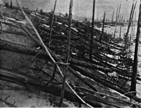 Siberia Trees