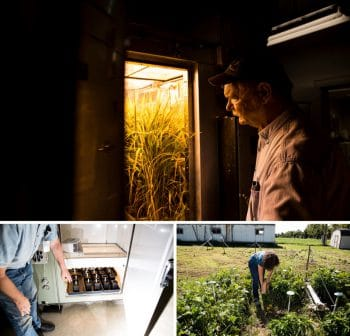 Lewis Ziska, a plant physiologist with the U.S. Department of Agriculture, examines rice growing in his laboratory in Beltsville, Md. Ziska and his colleagues are conducting experiments to find out how rising carbon dioxide levels affect the nutrient profile of plants. Plant physiologist Julie Wolf harvests peppers to study changes in vitamin C, lower right. | M. Scott Mahaskey/POLITICO