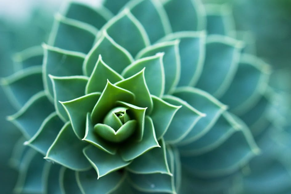   Ecology Plant   MR Online