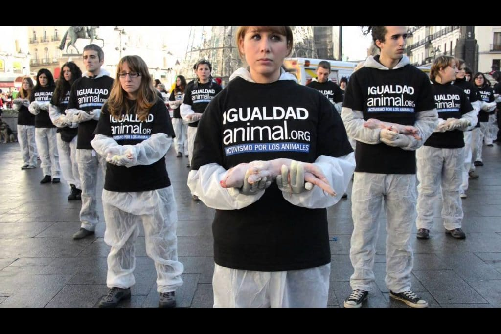   Igualdad Animal Animal Equality stages animal rights rally in Spain   MR Online