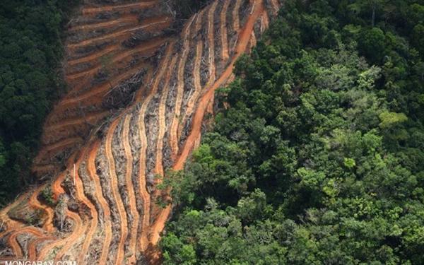Deforest (Photo: Mongabay.com)