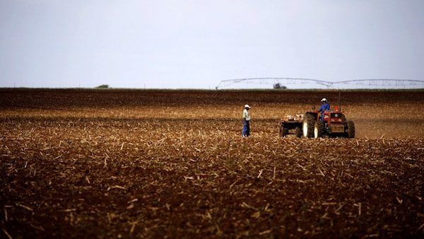 Farmers work on a land outside Lichtenburg, a maize-growing area in the North West province, South Africa November 26, 2015. REUTERS/Siphiwe Sibeko - RTX1W08U