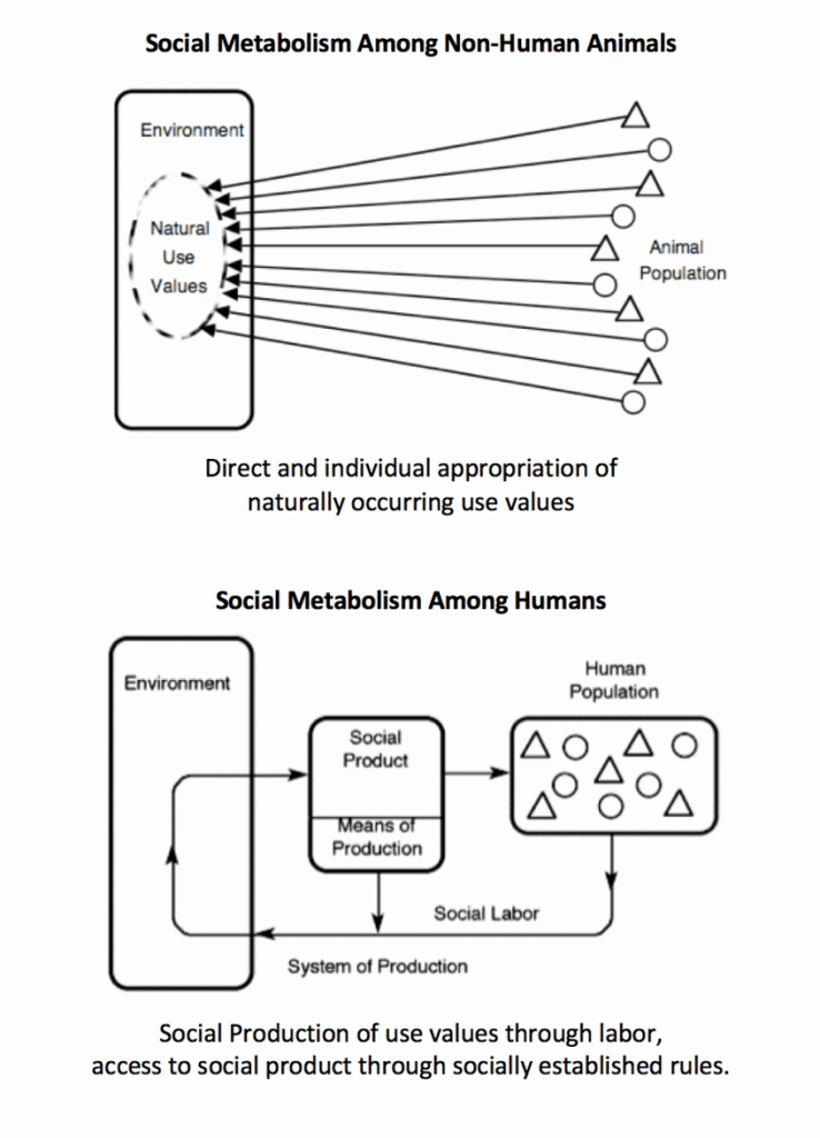 Social metabolism among non-human animals
