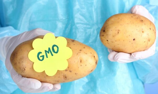 GMO Potato Creator Now Fears Its Impact on Human Health