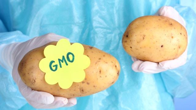 | GMO Potato Creator Now Fears Its Impact on Human Health | MR Online