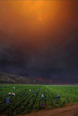 The picture above, taken by Andy Holzman (Southern California News Service) at a farm in Camarillo