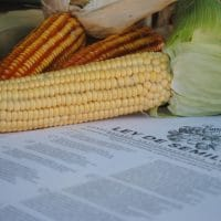 Venezuela's landmark Seed Law was approved 3 years ago. Native seeds such as corn have been rescued and multiplied. (Venezuela Libre de Transgenicos : Semillas del Pueblo)