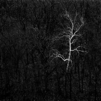 © Cole Thompson