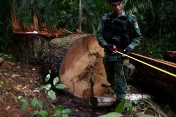 On patrol with FUNAI and members of the Uru-Eu-Wau-Wau, environmental police take stock of the damage wrought by illegal loggers in the tribe's territory in Rondônia on April 17, 2018. According to the Uru-Eu-Wau-Wau, a group of 15 men with machetes can clear lines through 20 kilometers of forest in a week.Photos: Gabriel Uchida