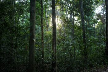 The true value of forest, like this section of Uru-Eu-Wau-Wau territory, cannot be quantified, and its Indigenous inhabitants don't see it as a repository of resources — whether it be gold, lumber, or carbon credits — to be extracted and sold. Photo: Gabriel Uchida