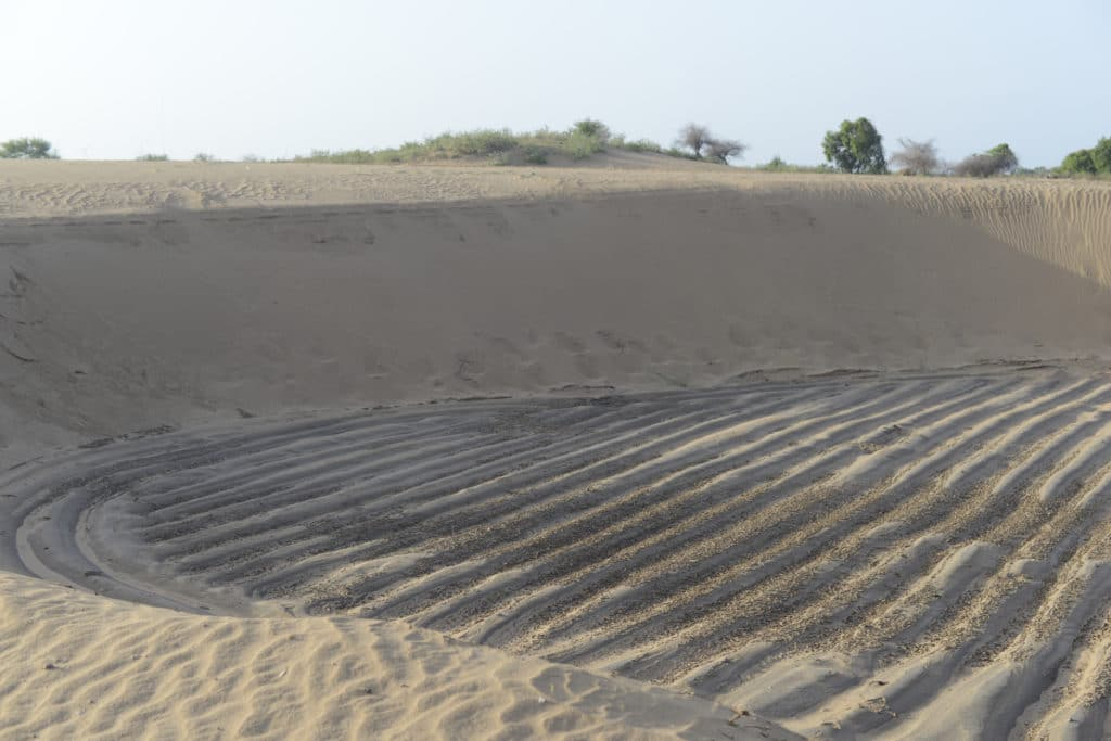 Honnureddy's painstakingly laid-out rows of plants were covered in sand in four days