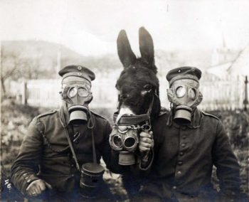 German soldiers, their mule, and tear gas (1916).