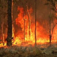 Bushfires in Australia [Photo- Wikimedia]