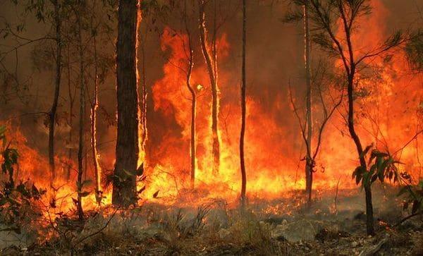 Bushfires in Australia [Photo- Wikimedia]