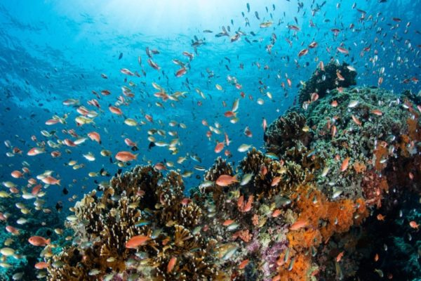 A coral reef near the Indonesian island of Bali. SHUTTERSTOCK