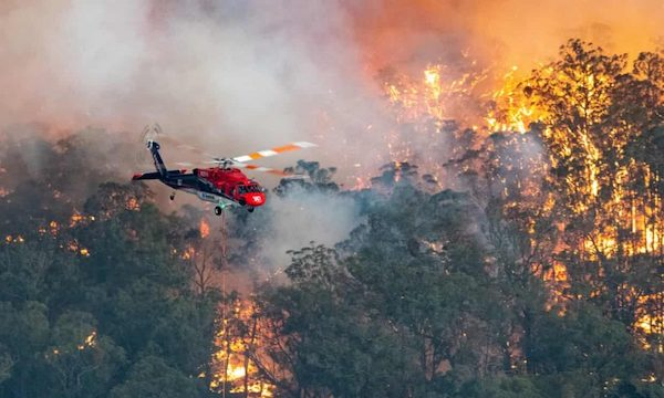In Australia, not only forests are burning, but entire towns, and endangered and precious animal species. Photograph: State Government Of Victoria Handout/EPA
