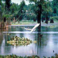 Heron taking flight on the Mississippi River. Image courtesy of EPA