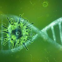   Pixabay Coronavirus Corona Virus Covid19 Free image on Pixabay   MR Online