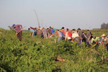 A work collective in the Herdeiros da Terra encampment in Rio Bonito do Iguaçu, Paraná, where roughly 1,100 landless families have occupied the land since 2014. Wellington Lenon