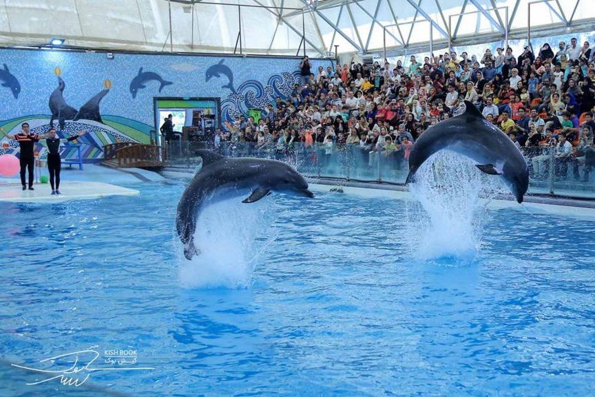 dolphinarium-kish-1024x576-1.jpg