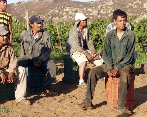 Wikimedia Commons File:Grape workers.jpg - Wikimedia Commons