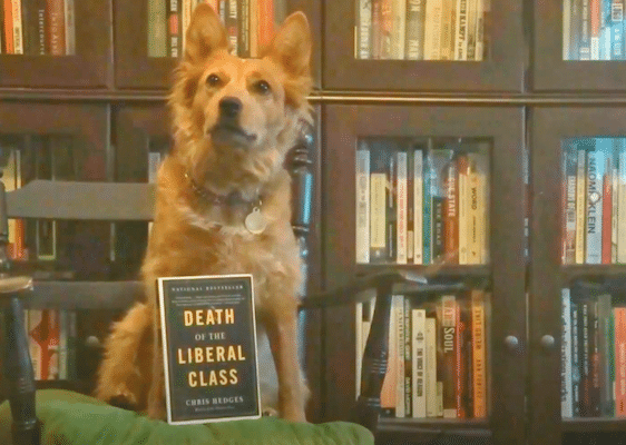   Death of the Liberal Class Review Radical Reviewer   MR Online