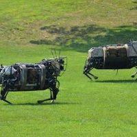 Robot sheep (Source: pinterest.com)