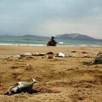   Dead fish trash plastic ocean pollution awareness Photo Pikistcom   MR Online