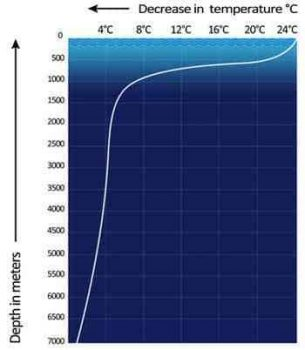 Typical ocean layers. Temperature falls rapidly in the thermocline, between the mixed layer (above 200 meters) and the deep layer (below 1000 meters) where temperature is nearly constant. Depths vary by latitude and season. Source: Wikimedia Commons