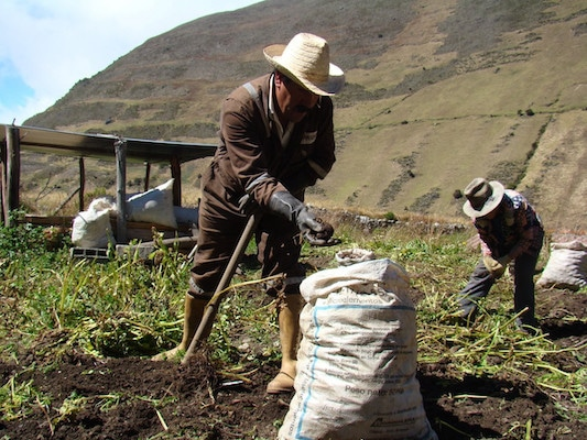 | Researchers academics and Andean families are working on strategies to recampesinize food choices Photo Ministry of Peoples Power for Science and Technology | MR Online