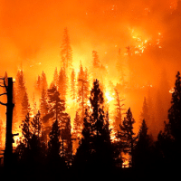 Media Blame Gender Reveal Parties, Not Climate Change, for West Coast Fires