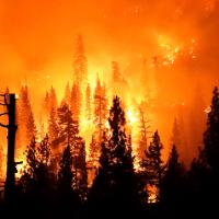 | Media Blame Gender Reveal Parties Not Climate Change for West Coast Fires | MR Online