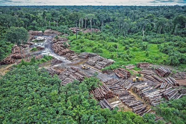 Illegal logging on Pirititi indigenous Amazon lands. (Photo: Flickr - quapan)
