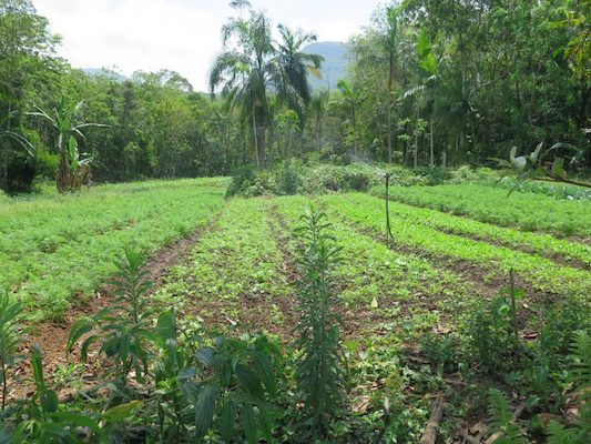 Agroecology establishes a sustainable relationship of crops to the environment.