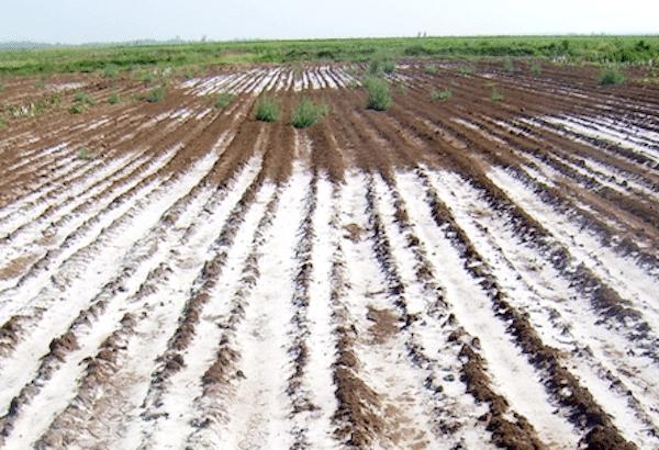 | Salinized soil fields in Ethiopia | MR Online