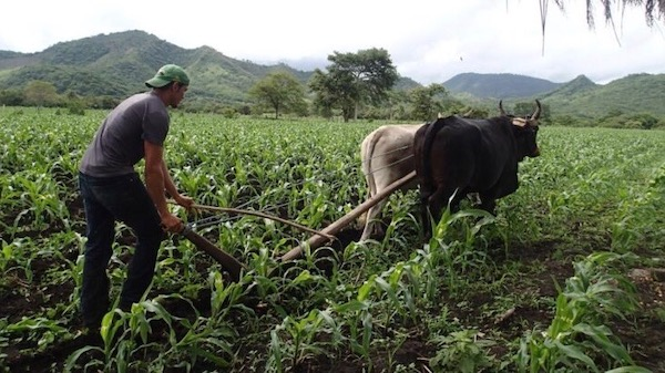 | The ATC which represents tens of thousands of farm workers helps run trainings on agroecological food production to help ensure healthy food access for all Photo ATC | MR Online