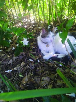 | Cat in the garden | MR Online