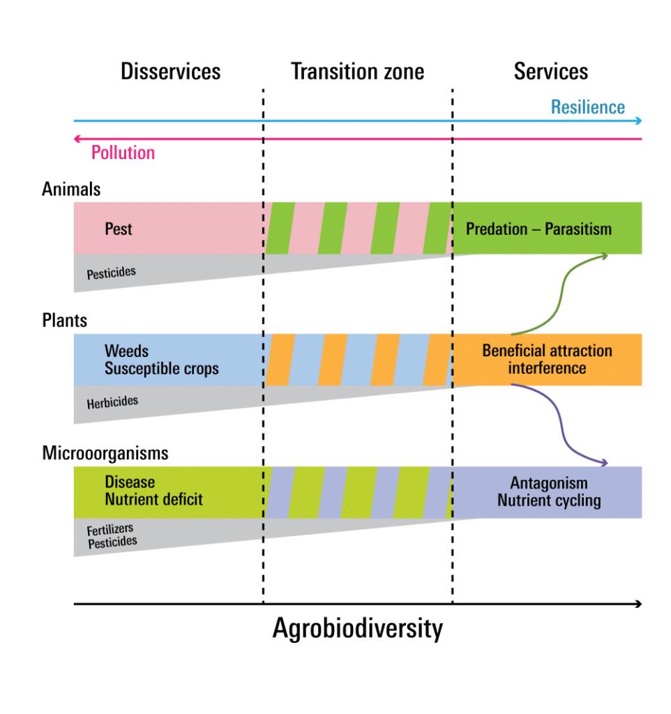 | Agrobiodiversity promotes ecological services | MR Online