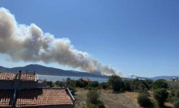   Forest fire in Urla Balıklıova   MR Online