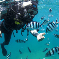 China lags in protecting fish and invertebrate stocks and aquatic plants, as well as coral reefs. Photo: XinhuaChina lags in protecting fish and invertebrate stocks and aquatic plants, as well as coral reefs. Photo: Xinhua China lags in protecting fish and invertebrate stocks and aquatic plants, as well as coral reefs. Photo: Xinhua
