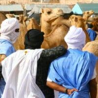 Camel market in Nouakchott, Mauritania, 2008.